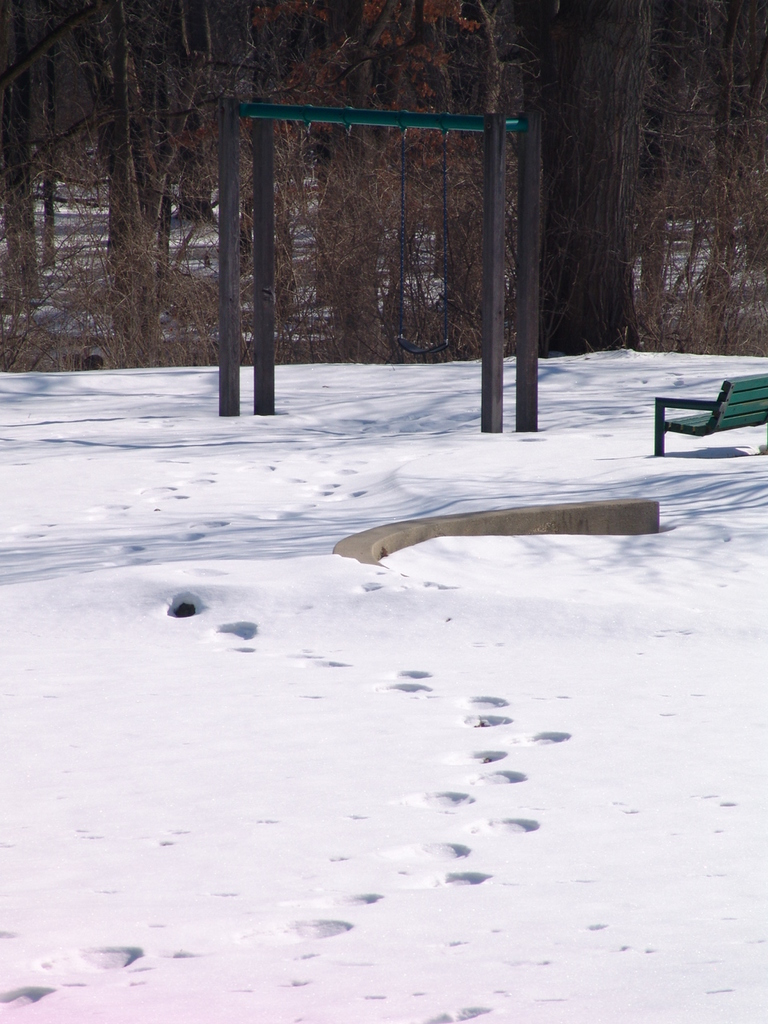 Lincoln Highway - Snowy Footprints in Les Arends Park