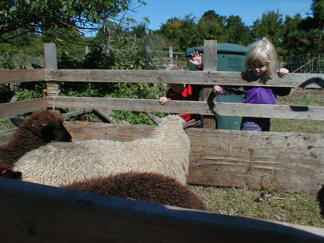 Mohawk Towpath Byway - Children and Sheep at Clifton Park's Farm Fest