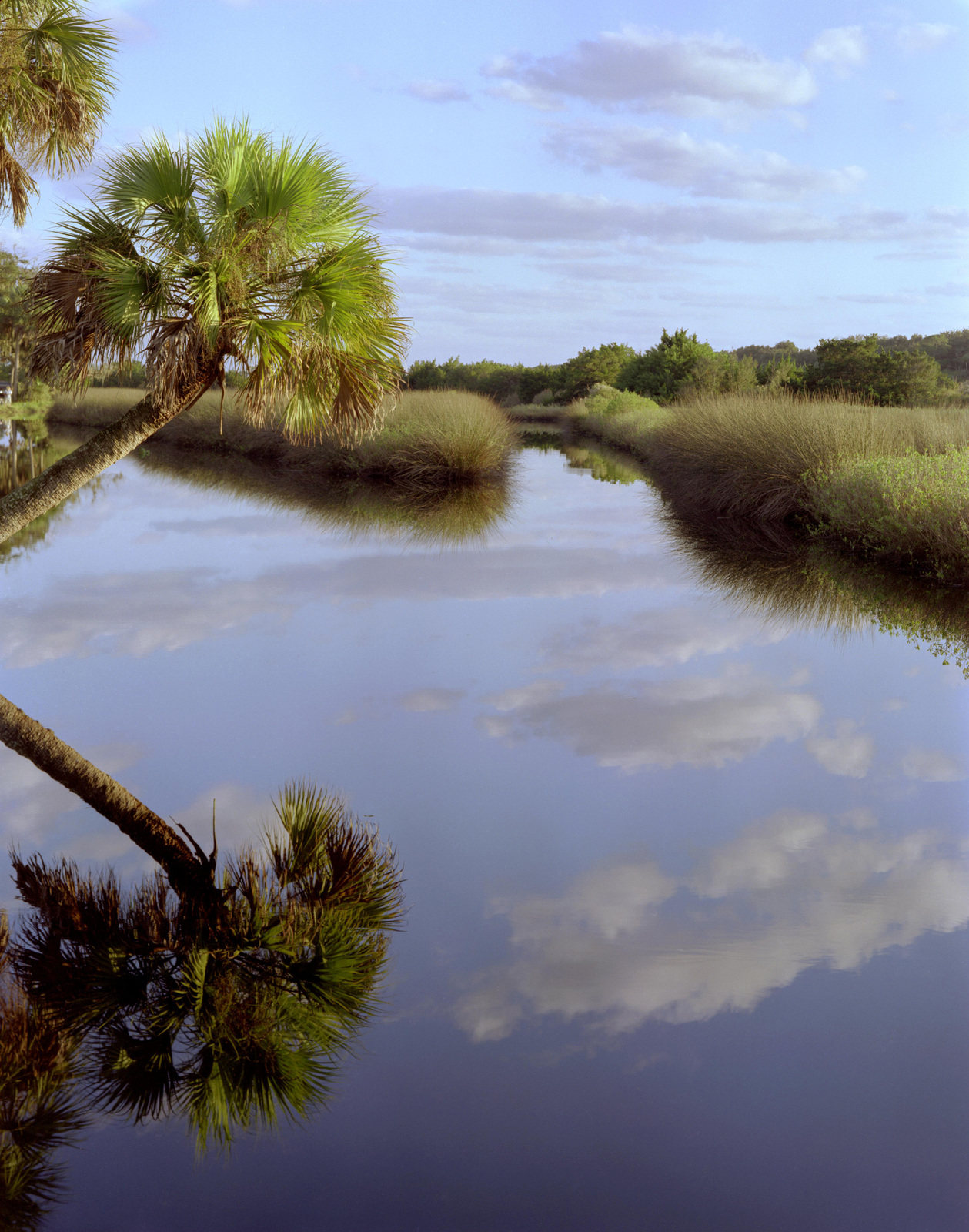 Ormond Scenic Loop & Trail - Date Palm Reflection on Highbridge Road