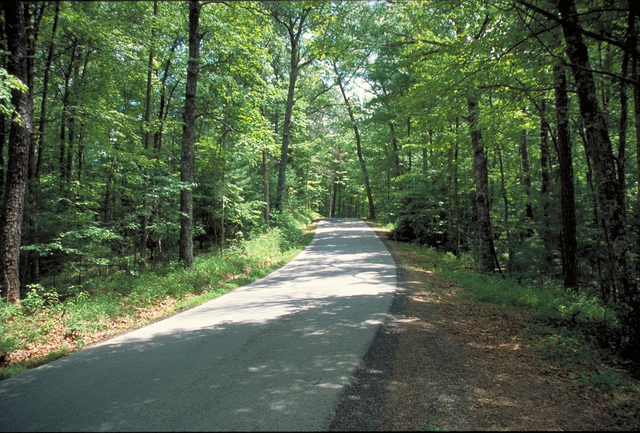 Red River Gorge Scenic Byway - Narrow Lane in a Forest