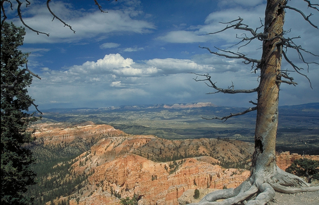 Scenic Byway 12 - Clouds, Red Rock and Tree at Bryce Canyon