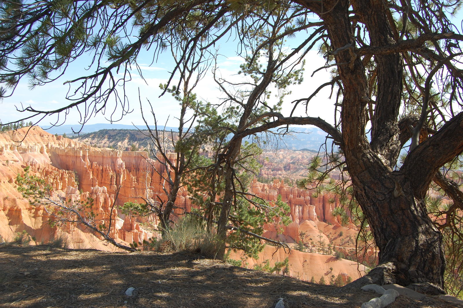 Scenic Byway 12 - Shady Spot Under a Pinyon Pine
