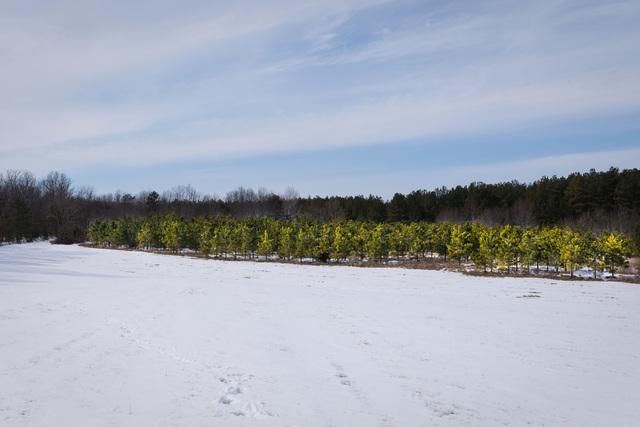Chesapeake Bay Program Office - Harrisons Farm [412-APD-1422-HarrisonFarm_019.jpg]