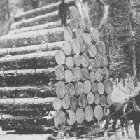 Photograph of Logs Heading to Market