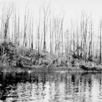 Photograph of Superior Forest Burned Over in 1910