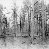 Photograph of Lydick Lake Fire Area
