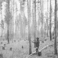 Photograph of a Forest Service Timber Sale Within 100 Years of the State Sale