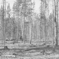 Photograph of a Timber Sale Area in a Jack Pine Stand After Cutting Is Completed