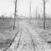 Photograph of a Typical Single Fire Line with a Plantation on the Minnesota Chippewa National Forest