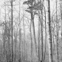 Photograph of a White Pine Hardwood Type East of Twin Lakes