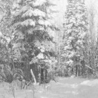 Photograph of a Snow Shoe Trail on the Road to Hill's