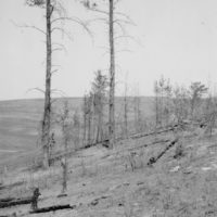 Photograph of the Burn of October 1923