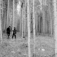 Photograph of Supervisor Marshall and Ranger Farley in a Thinned Stand of Norway Pine