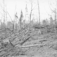 Photograph of a Burn a Half Mile South of Laona, Wisconsin