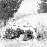 Photograph of Ring Necked Pheasant Food Shelter on a River Flat of the White River in Delta, Wisconsin