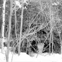 Photograph of Ruffed Grouse Food Shelter at Beaver Lake in Delta, Wisconsin