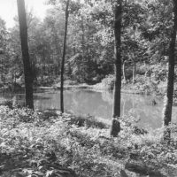 Photograph of Wildlife Pond in Hardwood Timber