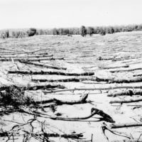 Photograph of Brush Used to Reduce Wind Erosion in San Blow While Black Locust Become Established