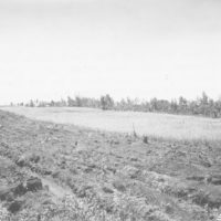 Photograph of Upland Game Bird Food Patch of Buckwheat
