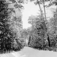 Photograph of Winter Scene Along Pike Bay Loop Road