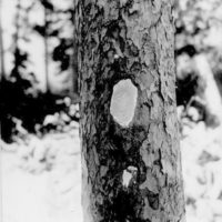 Photograph of U.S. Stamped into the Wood on the Blaze