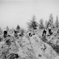Photograph of Civilian Conservation Corps (CCC) Enrollee Crew Planting
