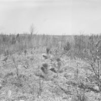 Photograph of Plantation Number 9 in Medford Ranger District