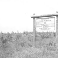 Photograph of Illinois Daughters of the American Revolution (DAR) Cooperative Forest Plantation Sign