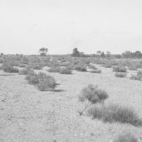 Photograph of Pitch Pine Plantation
