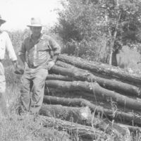 Photograph of Elm and Boxelder Pulpwood Cut from a Fence Row