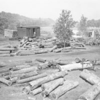 Photograph of Walnut Lots in a Yard at the Dubuque Company