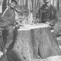 Photograph of Henry Mahr and His Son on the Stump of a Freshly Cut 250 Year Old Elm Tree
