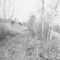 Photograph of Clearcut Aspen Along Highway 46