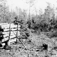 Photograph of Cutting of Aspen Overstory by Timber Sale