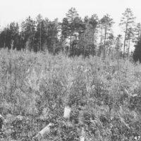 Photograph of Cut Foot Sioux Ranger Dist