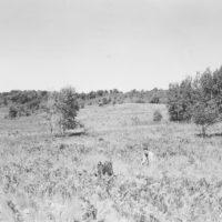 Photograph of Forest Ranger Al Barton
