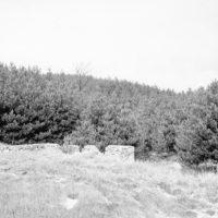 Photograph of Blackwell Plantation