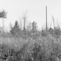 Photograph of Hardwood Sale of Scattered Mature Trees
