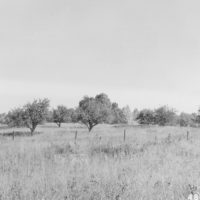 Photograph of Old Apple Orchard
