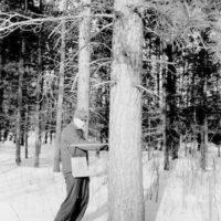 Photograph of Timber Cruising