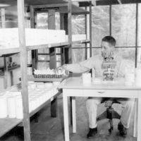 Photograph of Dr. Robert Raulund Inspecting Spruce Bud Worm Rearings for Parasites Inside the Insectory at Kawishiwi Experiment Station