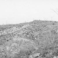 Photograph of Reclaimed Strip Mine Showing Black Locust and Shortleaf Pine
