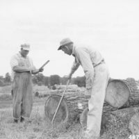 Photograph of Farm Forester and Logger Scaling Logs