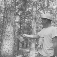Photograph of Assistant Ranger Bob Greenlaw Marking a Tree During a Timber-Marking Operation South of Winona, Missouri