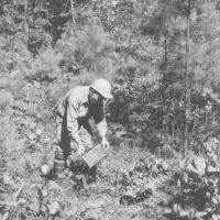 Photograph of Assistant Ranger Bob Greenlaw Pouring Herbicide