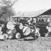 Photograph of Scaling Logs at Cloud Oak Flooring Company at Winona, Missouri