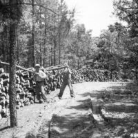 Photograph of Posts from Pine Plantation Thinning