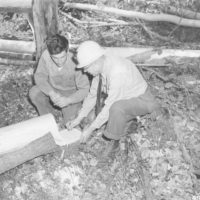 Photograph of Phelps Logger Al Hagenmiller and D. R. Tony Quinkert Counting Rings of Aspen Stump