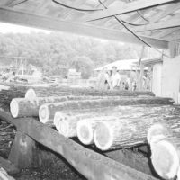 Photograph of Hardwood Logs on Deck of Headsaw