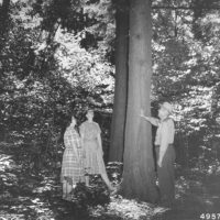 """Photograph of Ranger Tony Quinkert Talking to Two School Teachers on the Demonstration Trail During a """"Trees for Tomorrow"""" Conservation Workshop at Eagle River, Wisconsin"""